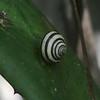 Snail @ Sendero Maravillas de Parque Nacional Viñales
