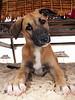 Resident puppy on Snorkel Island.