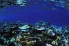 Coral reef at Honeymoon Island.