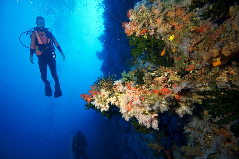 """Divers on the """"Great White Wall"""" once considered to be in the top 10 dive sites in the world."""