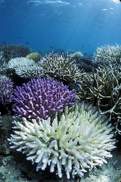 Coral reef at Snorkel Beach.