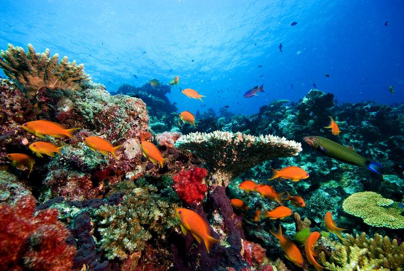 The diversity of marine life in Fiji is amazing.
