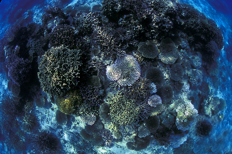 Coral reef at Snorkel Beach.