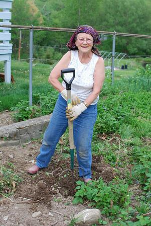 Grandma transferring her blackberries from the side of house to her garden.