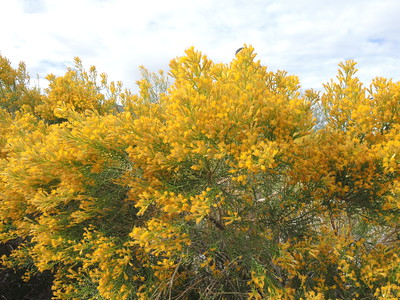Desert color in Kingston Wash. 11-06-2017, photo by Sherry