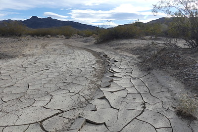 Dried and cracked mud in Kingston Wash, 11-06-2017.
