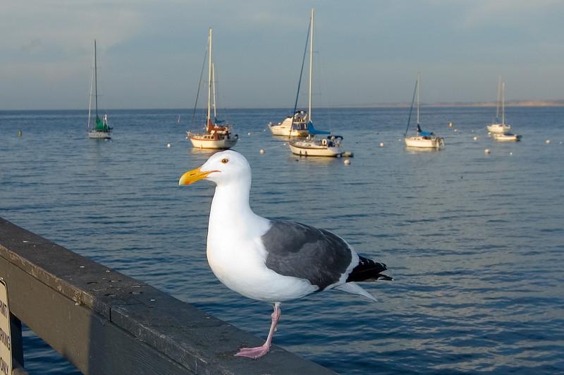 Monterey_2007_04_013