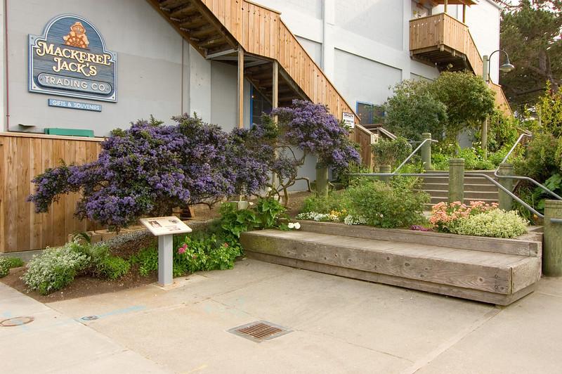 Monterey_2007_04_141