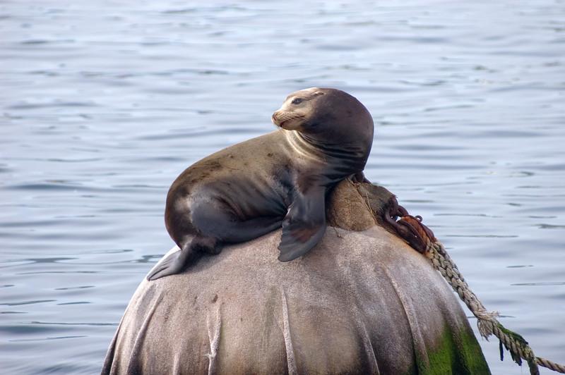 Monterey_2007_04_032