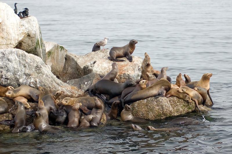 Monterey_2007_04_040