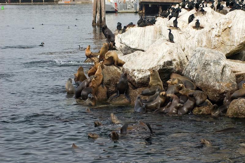 Monterey_2007_04_042