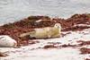 Monterey_2007_04_146