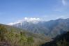 Sequoia_NP_034
