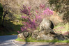 Sequoia_NP_028