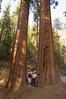 Sequoia_NP_042
