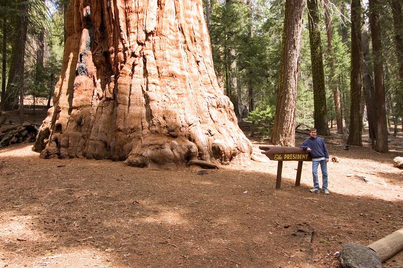 Sequoia_NP_156