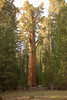 Sequoia_NP_045