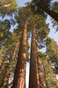 Sequoia_NP_046
