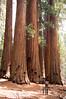 Sequoia_NP_163