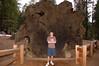 Sequoia_NP_055