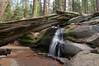 Sequoia_NP_144