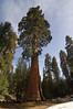 Sequoia_NP_059