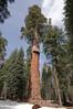 Sequoia_NP_165