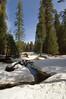 Sequoia_NP_067