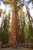 Sequoia_NP_048