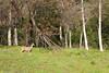 Sequoia_NP_026