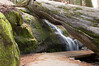 Sequoia_NP_135