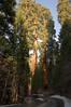 Sequoia_NP_036
