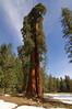 Sequoia_NP_068