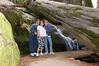 Sequoia_NP_132