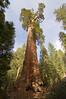 Sequoia_NP_200