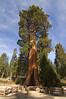 Sequoia_NP_062