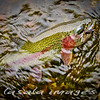 Deschutes River FlyFishing :