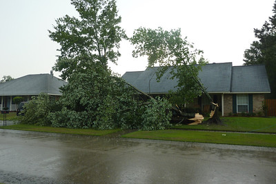 The storm before we left took down a neighbor's tree