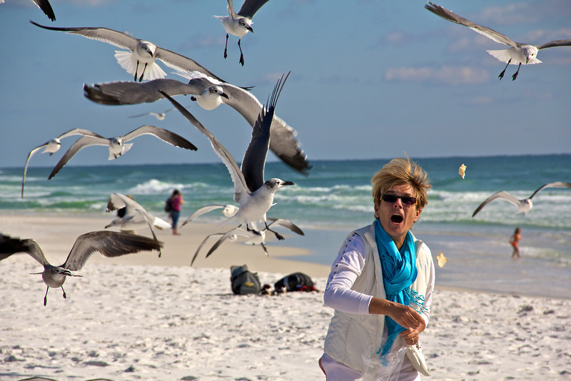 How to be popular with the seagulls on the beach