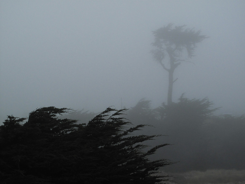Saturday morning. Lone tree in the fog.