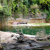 Safari jungle ride at Animal Kingdom