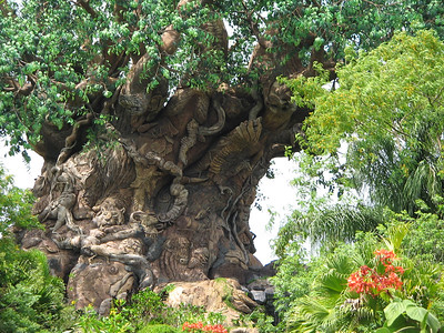 Disney World, Orlando, Florida - Animal Kimgdom
