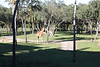 Plenty of animals to see on our savannah view from our room