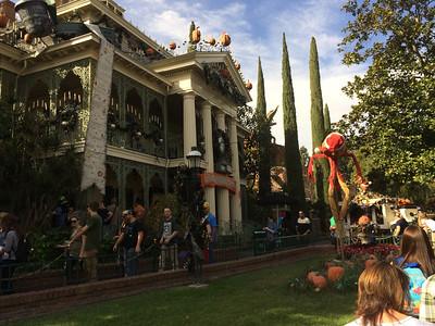 Disneyland December 13