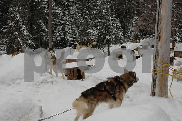 Dog Sledding in Montana Feb 2007
