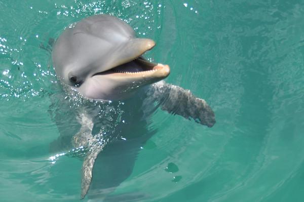 Dolphin Encounter Blue Lagoon Island Bahamas