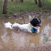 A very happy Jester cooling off in a puddle along the Hermosa Trail.