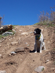 Jester on the trail to Wallace Lake.