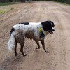 One happy, muddy dog!