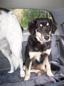 Dixon on his first road trip in Colorado.